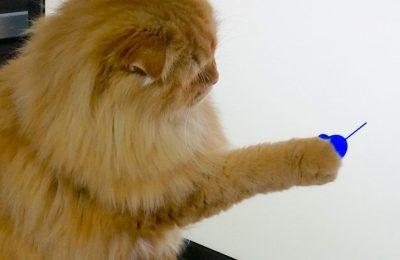 CATch!:人と猫が使えるコンピュータ