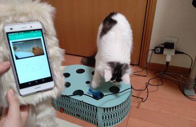 人と留守番中の猫をマッチングするシステム