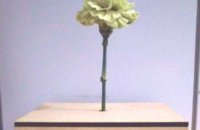 花の健康状態の変化によって環境情報を伝達する装置